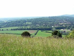 Box Hill in Surrey: Maybe the view from the Forsyte house at Robin Hill was something like this?