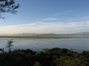 Lake Naivasha, February 2013.